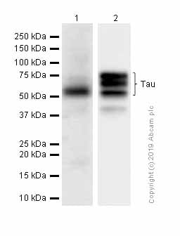 Western blot - Anti-Tau antibody [E178] (ab32057)