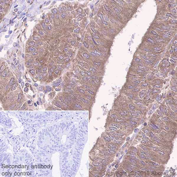 Immunohistochemistry (Formalin/PFA-fixed paraffin-embedded sections) - Anti-SHP2 antibody [Y478] (ab32083)