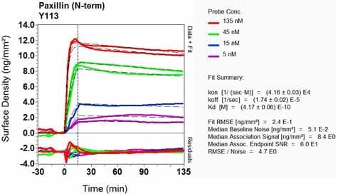 OI-RD Scanning - Anti-Paxillin antibody [Y113] (ab32084)