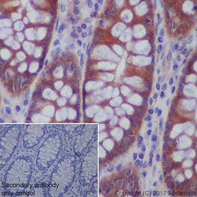 Immunohistochemistry (Formalin/PFA-fixed paraffin-embedded sections) - Anti-AMPK beta 1 antibody [Y367] (ab32112)