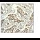 Immunohistochemistry (Formalin/PFA-fixed paraffin-embedded sections) - Anti-HDAC2 antibody [Y461] (ab32117)