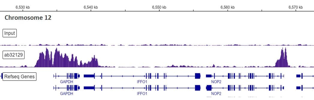ChIP-sequencing - Anti-Histone H3 (acetyl K9) antibody [Y28] - ChIP Grade (ab32129)