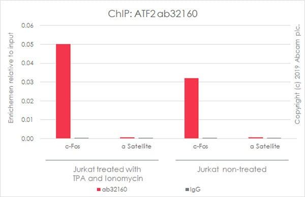 ChIP - Anti-ATF2 antibody [E243] (ab32160)