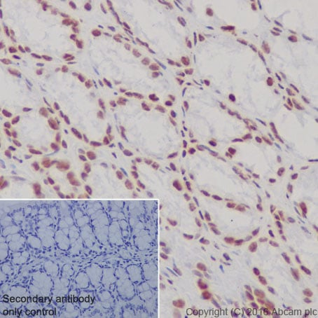 Immunohistochemistry (Formalin/PFA-fixed paraffin-embedded sections) - Anti-Histone H3 (di methyl K4) antibody [Y47] - ChIP Grade (ab32356)