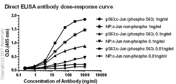 ELISA - Anti-c-Jun (phospho S63) antibody [Y172] (ab32385)
