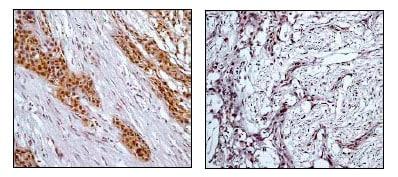 Immunohistochemistry (Formalin/PFA-fixed paraffin-embedded sections) - Anti-RSK1 p90 (phospho T359 + S363) antibody [E238] (ab32413)
