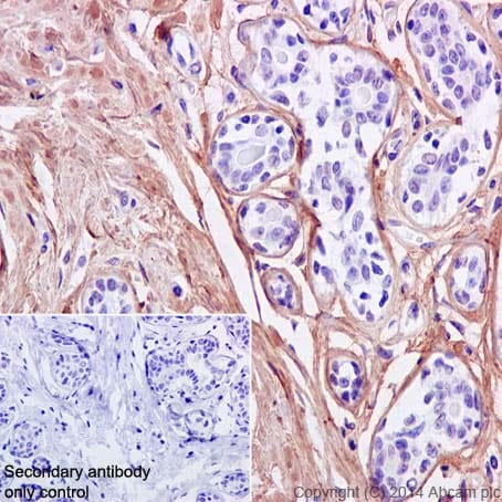 Immunohistochemistry (Formalin/PFA-fixed paraffin-embedded sections) - Anti-Fibronectin antibody [F1] (ab32419)