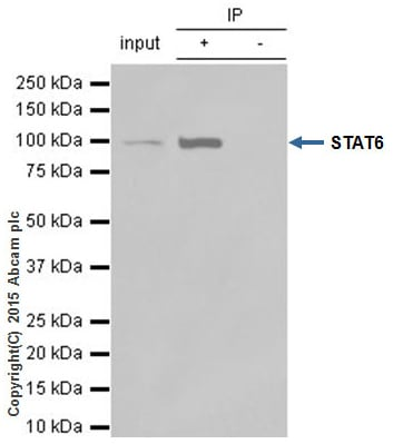 Immunoprecipitation - Anti-STAT6 antibody [YE361] (ab32520)