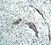 Immunohistochemistry (Formalin/PFA-fixed paraffin-embedded sections) - Anti-Caspase-9 antibody [E23] (ab32539)