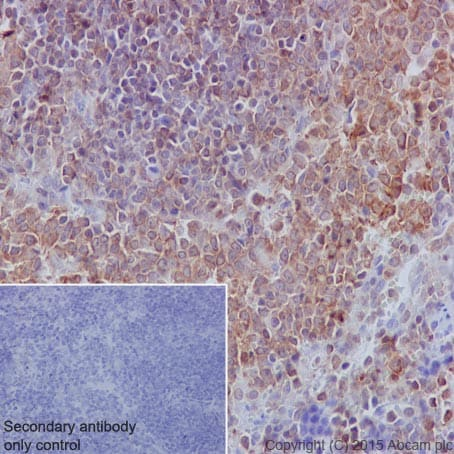 Immunohistochemistry (Formalin/PFA-fixed paraffin-embedded sections) - Anti-SHP1 antibody [Y476] (ab32559)