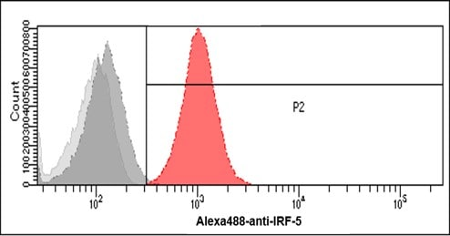Flow Cytometry - Anti-IRF5 antibody [10T1] (ab33478)