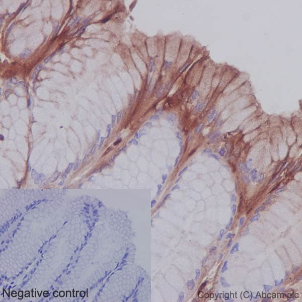 Immunohistochemistry (Formalin/PFA-fixed paraffin-embedded sections) - Anti-SHC antibody [EP332Y] (ab33770)