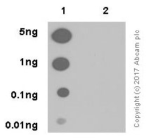 Dot Blot - Anti-p53 (phospho S392) antibody [EP155Y] (ab33889)