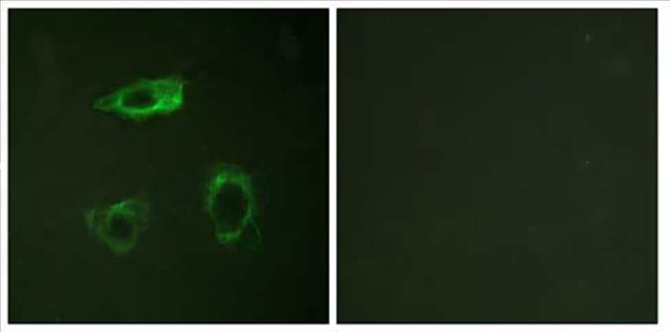 Flow Cytometry - Anti-CD18 antibody [PNK-1] (ab34117)