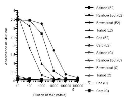 ELISA - Anti-zona radiata antibody [MN-8C4] (ab36883)