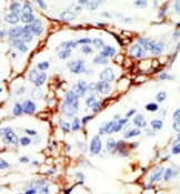 Immunohistochemistry (Formalin/PFA-fixed paraffin-embedded sections) - Anti-DOK2 antibody (ab37832)