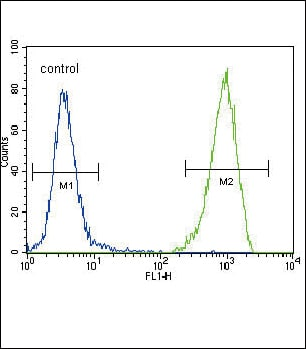 Flow Cytometry - Anti-Flt3 / CD135 antibody - Aminoterminal end (ab37847)