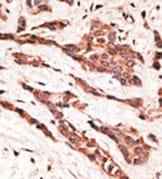 Immunohistochemistry (Formalin/PFA-fixed paraffin-embedded sections) - Anti-EDG4 antibody (ab38322)