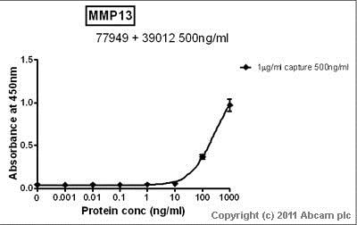 Sandwich ELISA - Anti-MMP13 antibody (ab39012)