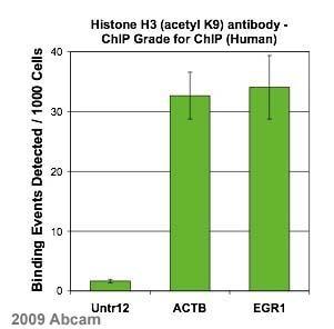ChIP - Anti-Histone H3 (acetyl K9) antibody - ChIP Grade (ab4441)