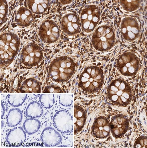Immunohistochemistry (Formalin/PFA-fixed paraffin-embedded sections) - HRP Anti-alpha Tubulin antibody [DM1A] - Loading Control (ab40742)