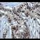 Immunohistochemistry (Formalin/PFA-fixed paraffin-embedded sections) - Anti-Chk1 antibody [EP691Y] (ab40866)