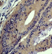 Immunohistochemistry (Formalin/PFA-fixed paraffin-embedded sections) - Anti-General Receptor for phosphoinositides 1/GRASP antibody (ab40884)