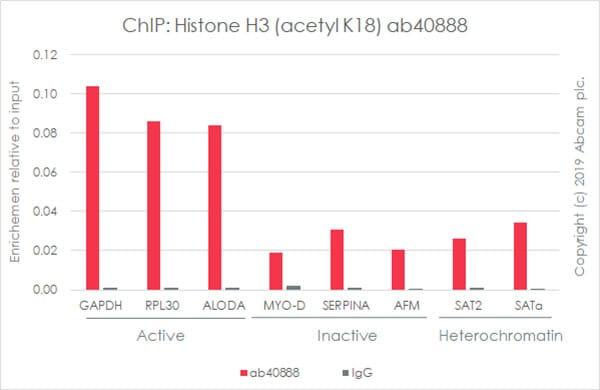 ChIP - Anti-Histone H3 (acetyl K18) antibody [EP959Y] - ChIP Grade (ab40888)