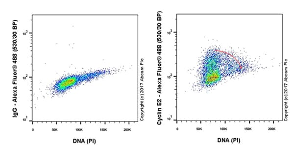 Flow Cytometry - Anti-Cyclin E2 antibody [EP454Y] (ab40890)