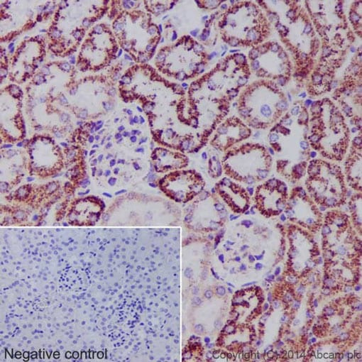 Immunohistochemistry (Formalin/PFA-fixed paraffin-embedded sections) - Anti-Hsp60 antibody [EP1006Y] - Loading Control (ab45134)