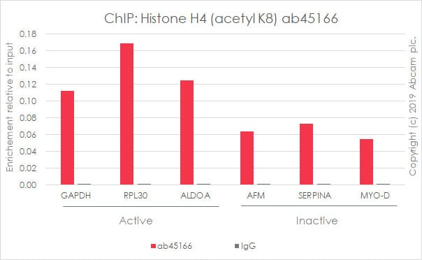 ChIP - Anti-Histone H4 (acetyl K8) antibody [EP1002Y] - ChIP Grade (ab45166)