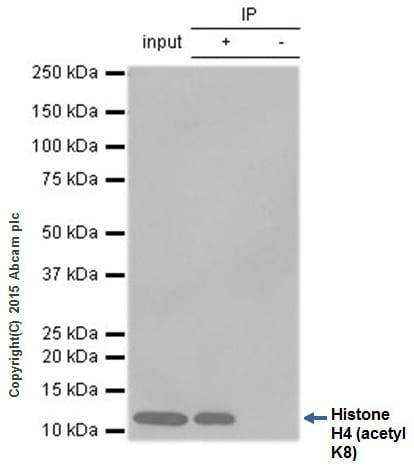 Immunoprecipitation - Anti-Histone H4 (acetyl K8) antibody [EP1002Y] - ChIP Grade (ab45166)