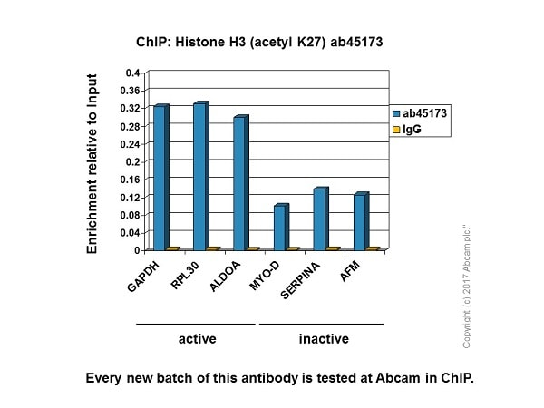 ChIP - Anti-Histone H3 (acetyl K27) antibody [EP865Y] - ChIP Grade (ab45173)