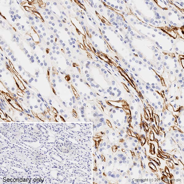 Immunohistochemistry (Formalin/PFA-fixed paraffin-embedded sections) - Anti-Vimentin antibody - Cytoskeleton Marker (ab45939)
