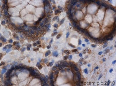 Immunohistochemistry (Formalin/PFA-fixed paraffin-embedded sections) - Anti-NEDD4-2 antibody (ab46521)