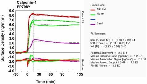 OI-RD Scanning - Anti-Calponin 1 antibody [EP798Y] (ab46794)
