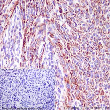 Immunohistochemistry (Formalin/PFA-fixed paraffin-embedded sections) - Anti-Hsp60 antibody (ab46798)