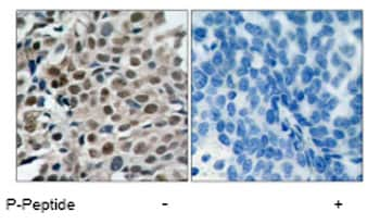 Immunohistochemistry (Formalin/PFA-fixed paraffin-embedded sections) - Anti-FOXO3A (phospho S253) antibody (ab47285)