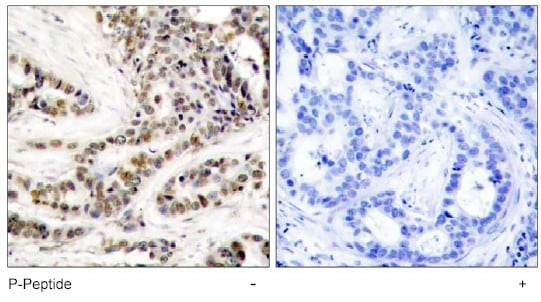 Immunohistochemistry (Formalin/PFA-fixed paraffin-embedded sections) - Anti-CREB (phospho S129) antibody (ab47373)
