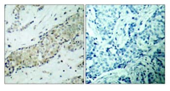 Immunohistochemistry (Formalin/PFA-fixed paraffin-embedded sections) - Anti-HDAC5 antibody (ab47519)