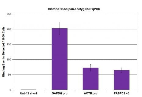 ChIP - Anti-Histone H3 (acetyl K9 + K14 + K18 + K23 + K27) antibody - ChIP Grade (ab47915)