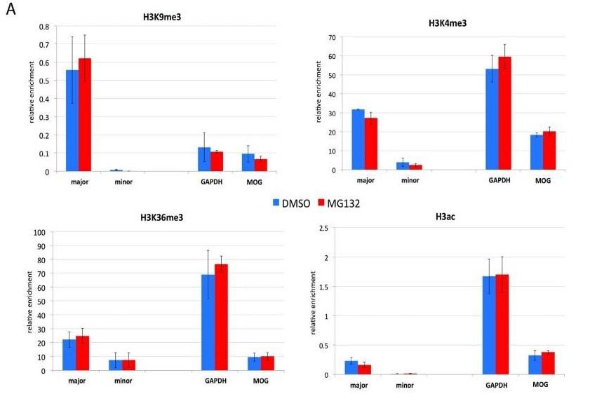 Acetyl Histone H3 (K9 + K14 + K18 + K23 + K27) antibody - ChIP Grade