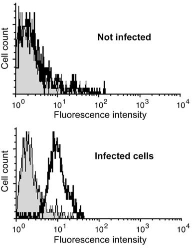Flow Cytometry - Anti-Parainfluenza Virus type 3 antibody [M02122321] (ab49756)