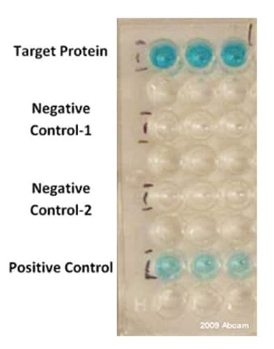 ELISA - Anti-DDDDK tag (Binds to FLAG® tag sequence) antibody [M2] (HRP) (ab49763)