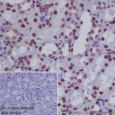 Immunohistochemistry (Formalin/PFA-fixed paraffin-embedded sections) - Anti-RNA polymerase II CTD repeat YSPTSPS (phospho S2) antibody - ChIP Grade (ab5095)