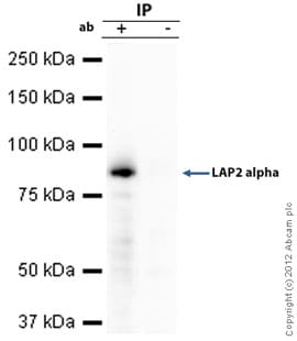 Immunoprecipitation - Anti-LAP2 alpha antibody (ab5162)