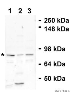 Western blot - Anti-EPC1 antibody (ab5514)
