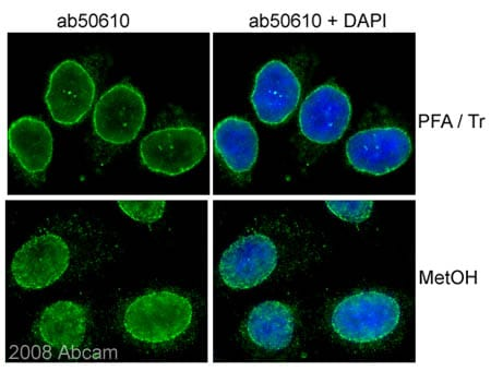 Immunocytochemistry/ Immunofluorescence - Anti-NUP98 antibody [2H10] - Nuclear Pore Marker (ab50610)