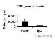 ChIP - Anti-Twist antibody [Twist2C1a] - ChIP Grade (ab50887)