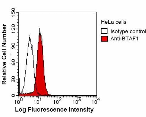 Flow Cytometry - Anti-BTAF1 antibody [BTA3D61] (ab50990)